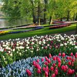 Blomstertur til Holland 24. – 27. april